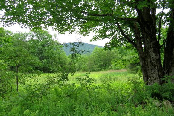 Hedgehog Hill North, Mount Holly, VT 05758