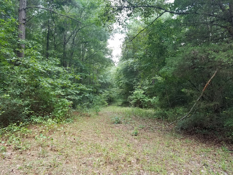 49 Acres of Timber!, Timpson, TX 75975