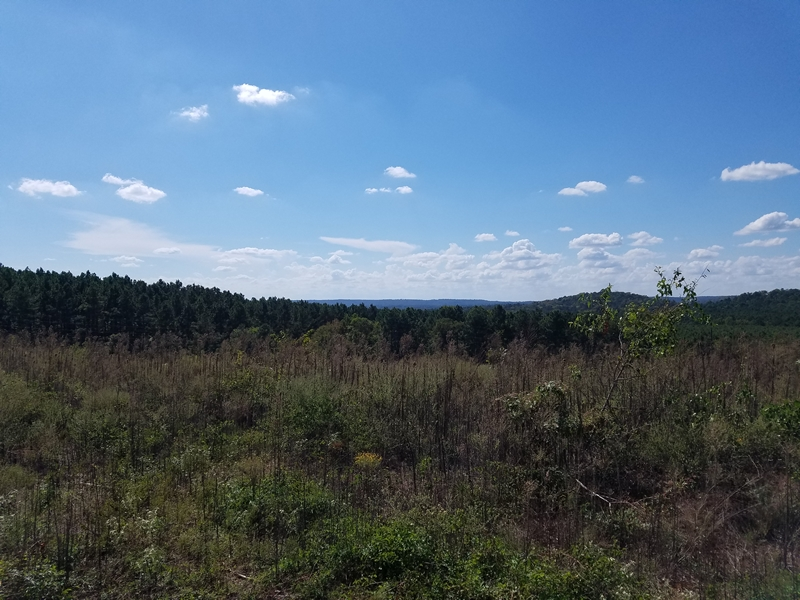 466 Acres of Timber Land, Rusk, TX 75785