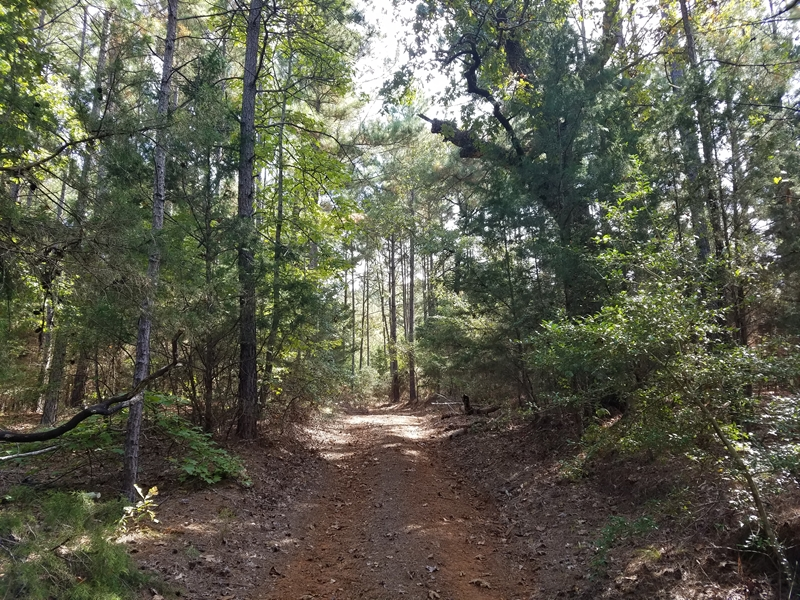 279 acres of beautiful timber land!, Jacksonville, TX 75766