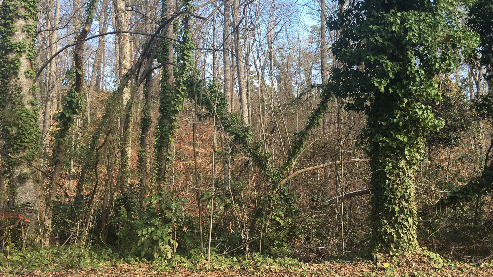 Exceptional residential lot in the Chattahoochee Estates neighborhood. Gentle rolling topography with some trees. Located across the street from beautiful Lake Lanier homes, just down the street from the Chattahoochee Golf Course and the Chattahoochee Country Club. Bring your own builder or we can recommed one. No restrictions or covenants.